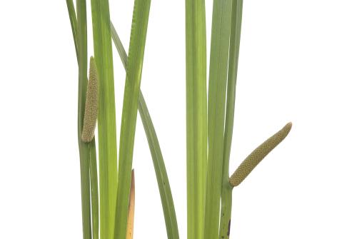 zieloneswiatki